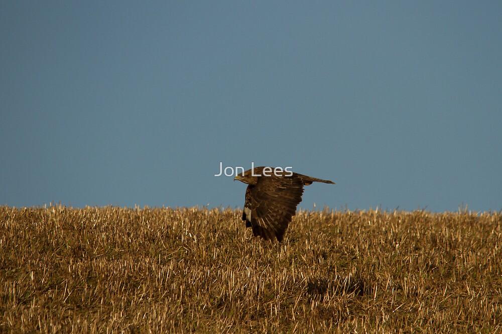 Common Buzzard by Jon Lees