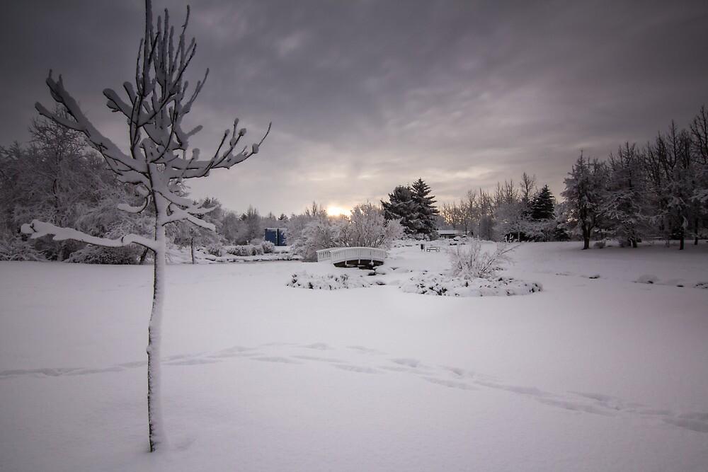 the snowy tree by JorunnSjofn Gudlaugsdottir