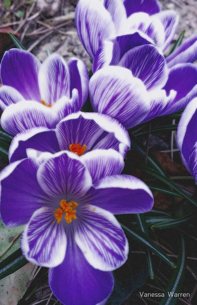 Petals in Purple by Vanessa  Warren