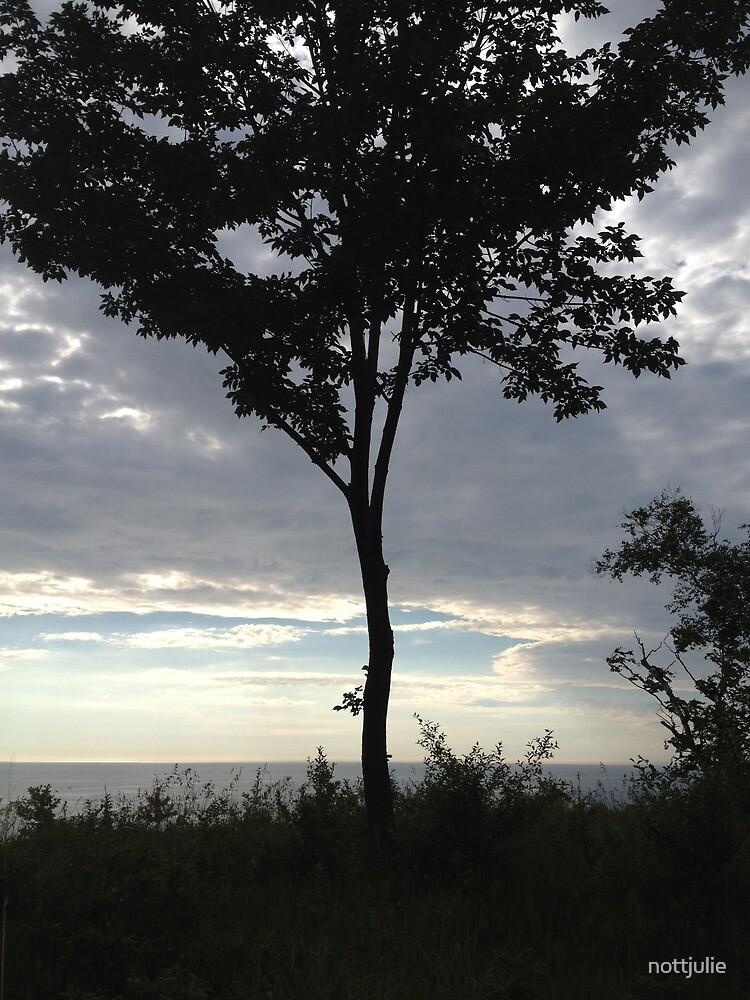 Lake Michigan tree at sunset by nottjulie