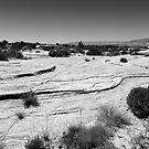 Utah Rocks V by David Lamb