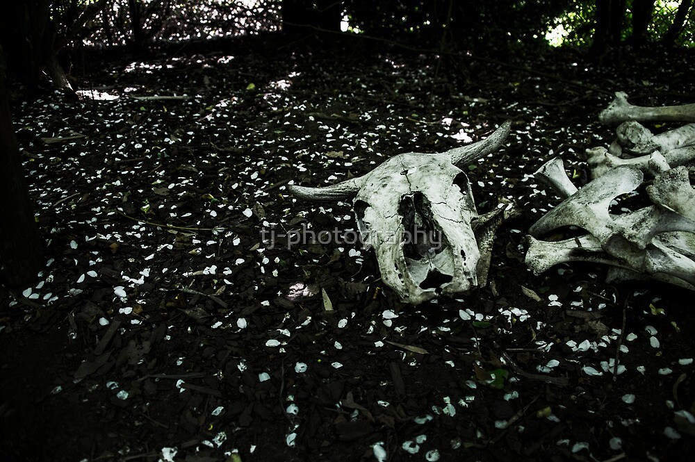 Deserted Cow Skull by tj-photography