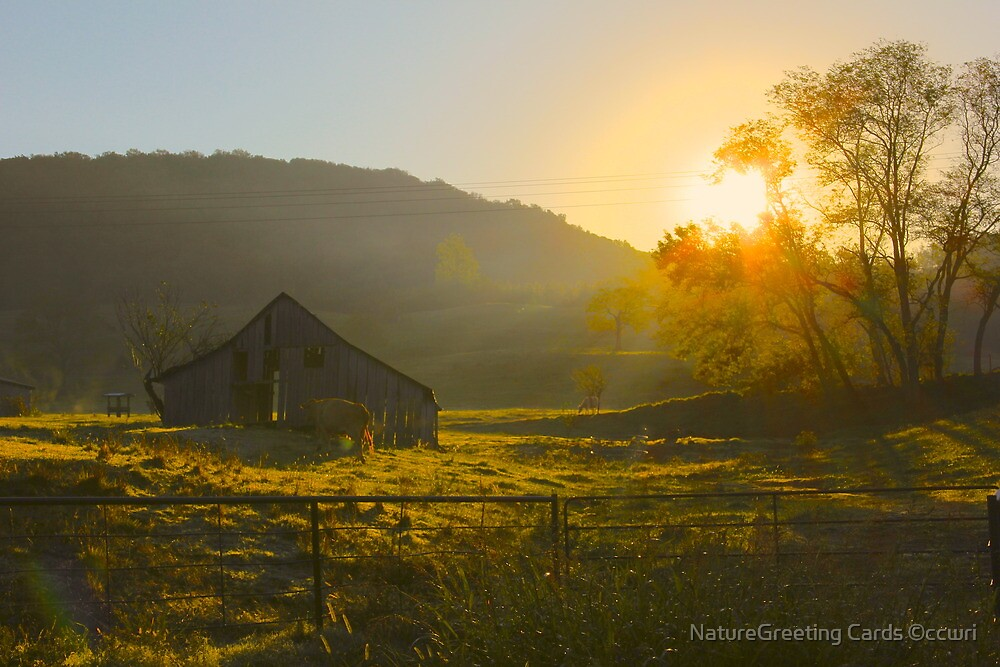 Last golden Glow by NatureGreeting Cards ©ccwri