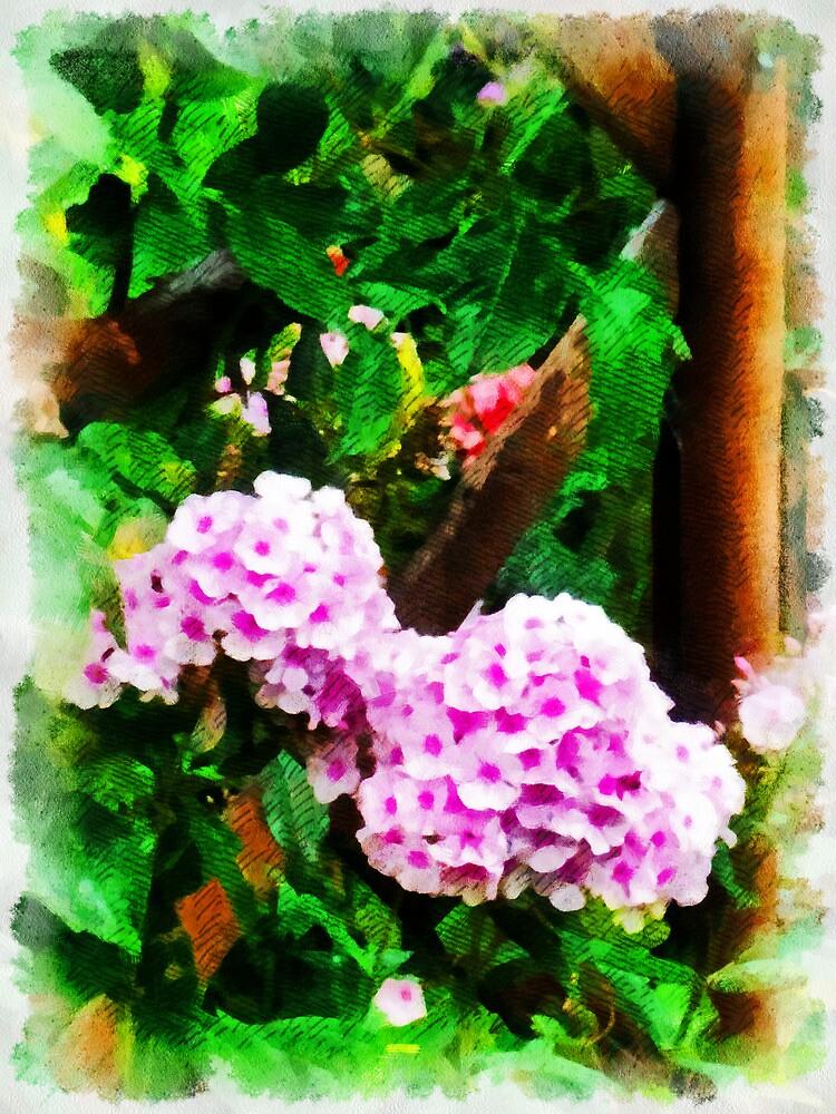 Summer Splendour  by PictureNZ