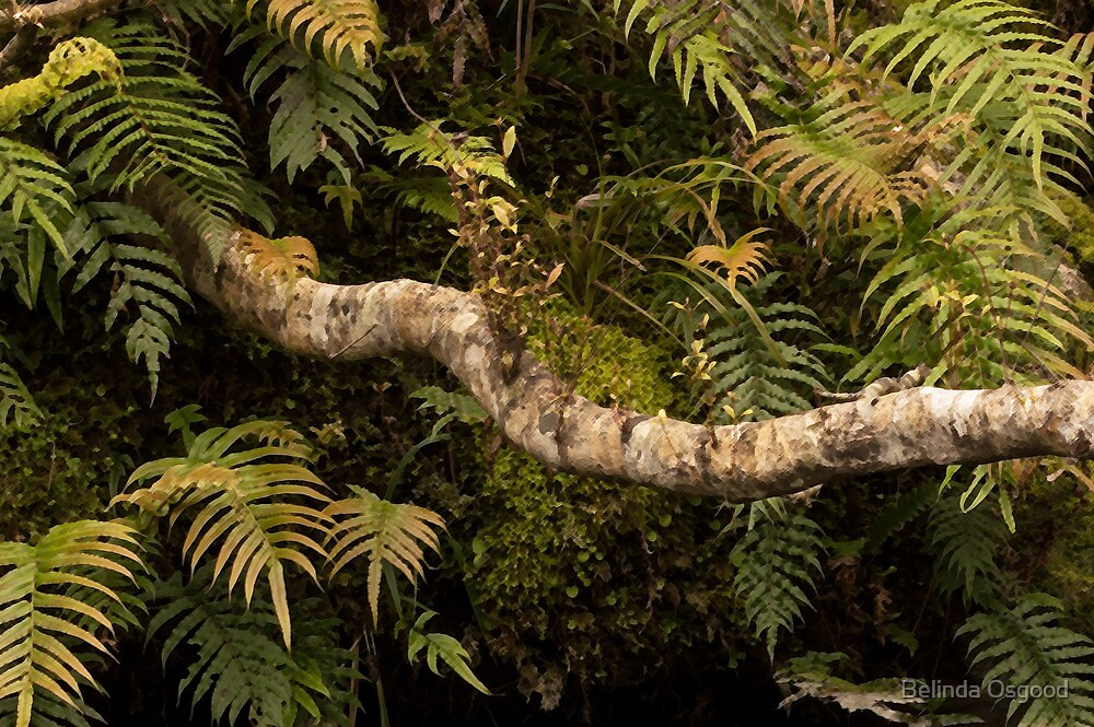 A Snaking Branch by Belinda Osgood