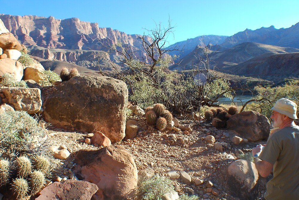 Cacti in the Grand Canyon by dinahmite