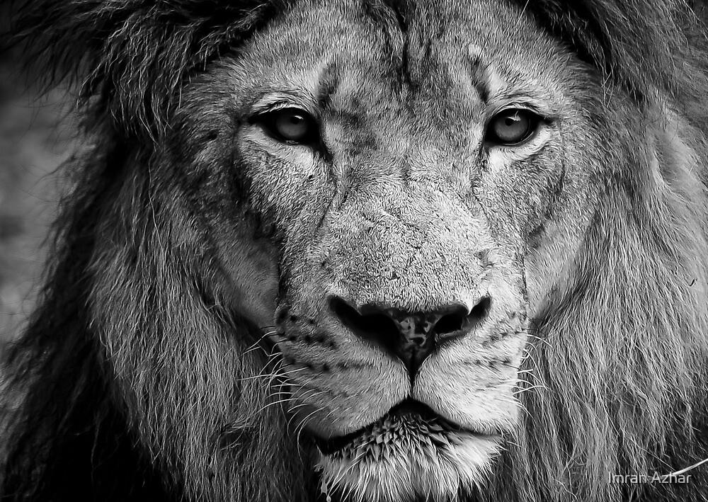 Aslan The Great by Imran Azhar