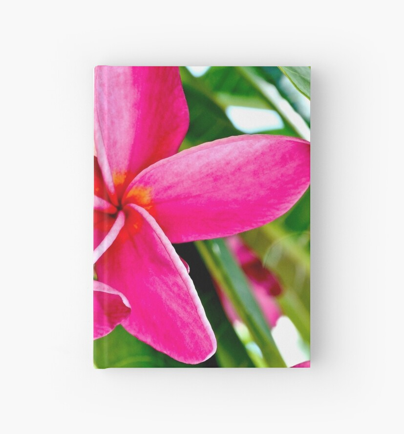 Tropical Pink Plumeria Flower Blooms by Amy McDaniel