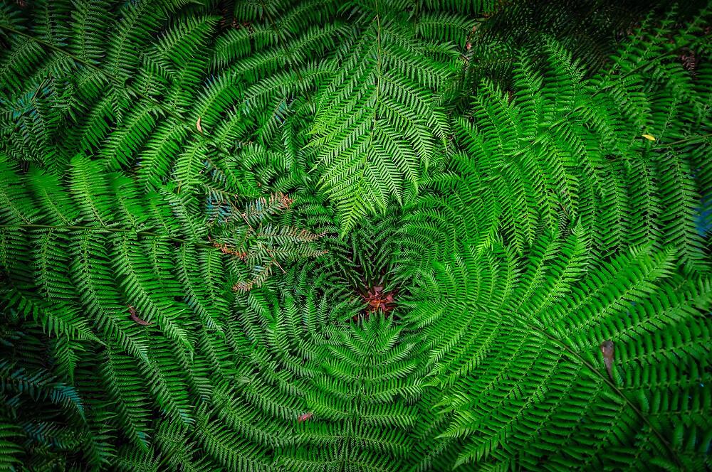 Fern Vertigo by Russell Charters
