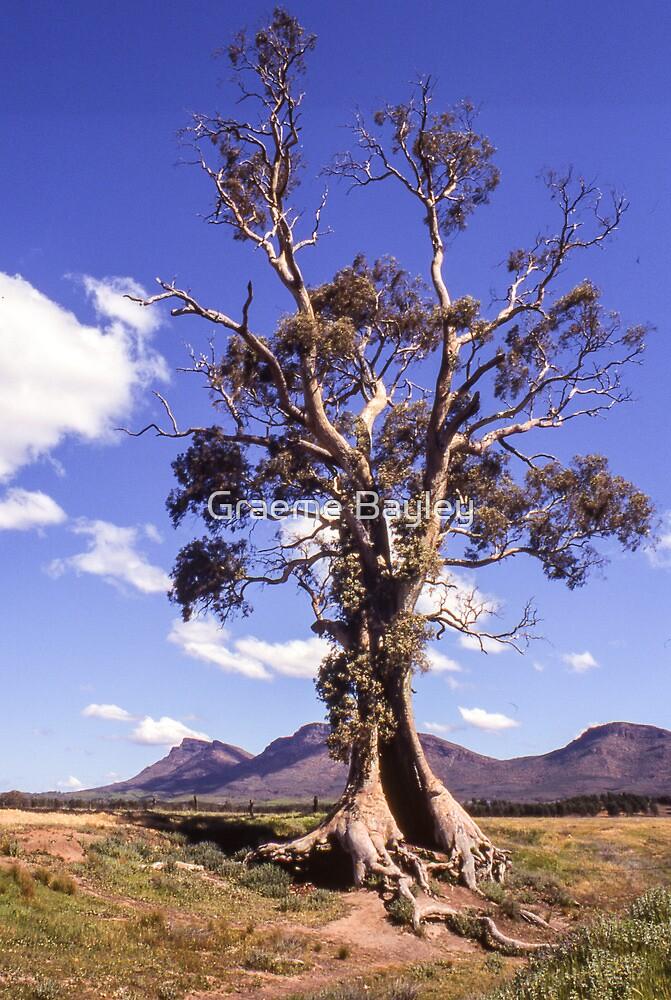 Cazneaux Tree. Australian Gum Tree. by Graeme Bayley