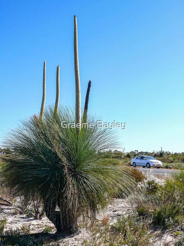 Grass Tree. Australia. by Graeme Bayley