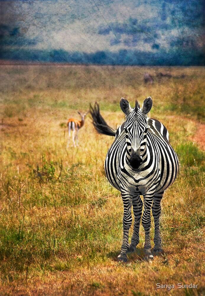 White Stripes  by Sanya  Sundar