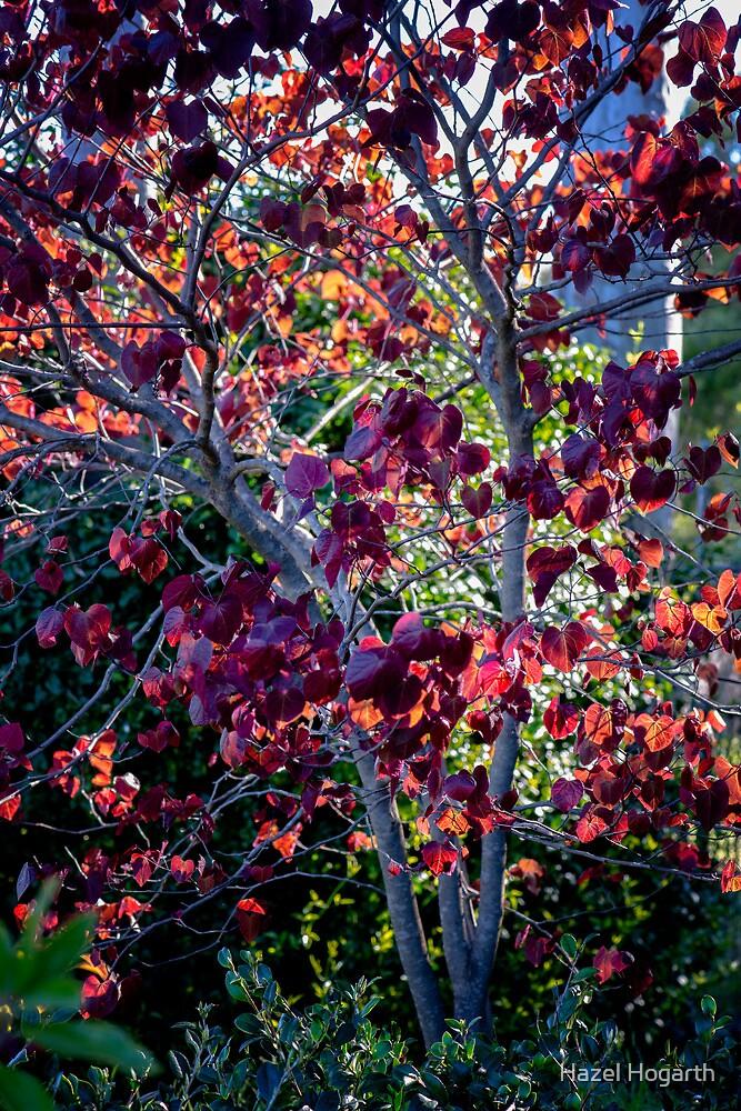 0251 Jenny's Garden by Hazel Hogarth