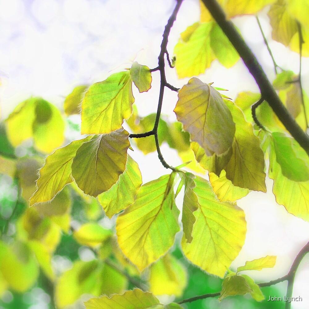 Leaves 2 by John Lynch