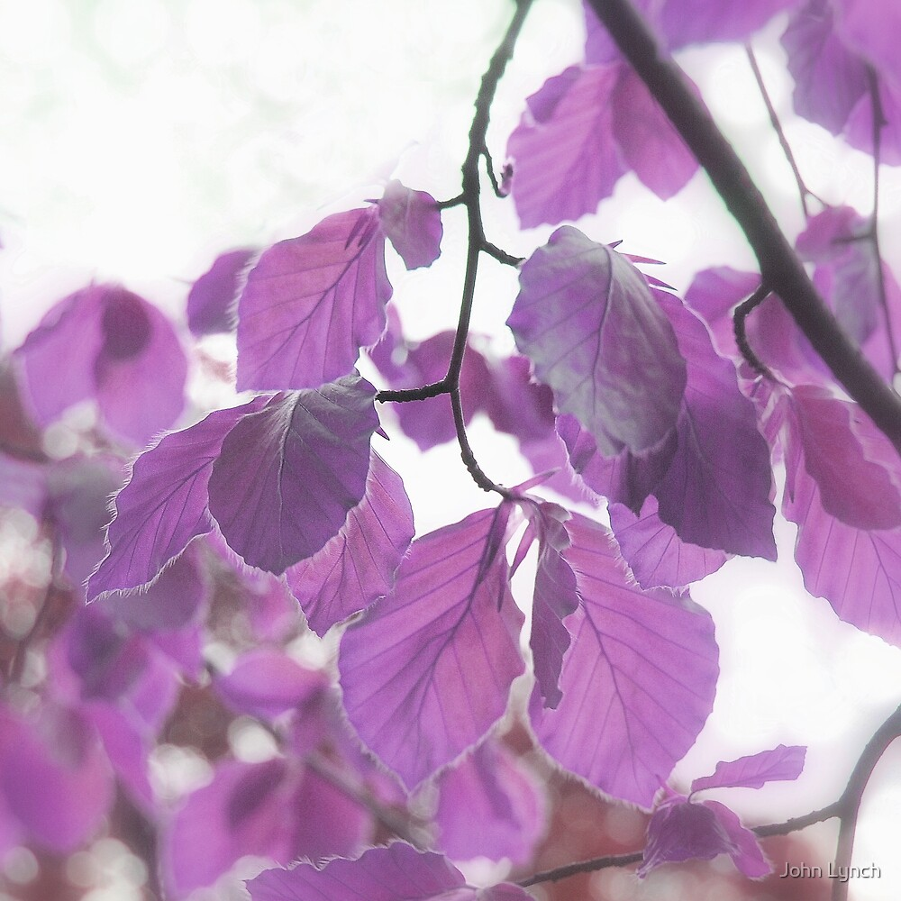 Leaves 6 by John Lynch