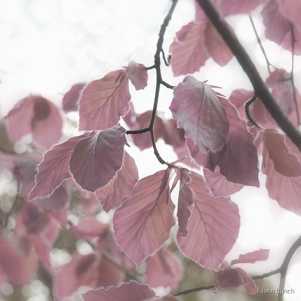 Leaves 7 by John Lynch