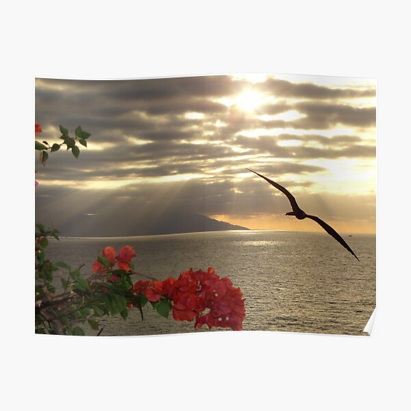 sunset with bougainvilleas and frigate bird - puesta del sol con buganvilla y fragata Poster