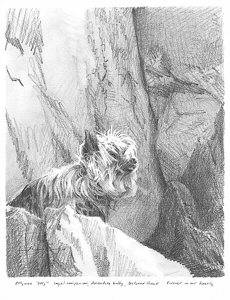 Mountain Yorkshire terrier drawing by Mike Theuer
