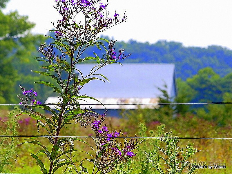 A Country  View by Grinch/R. Pross