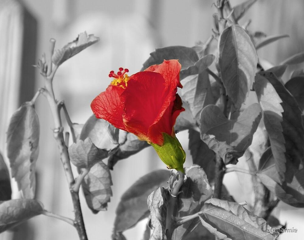 Red N Green by alamarmie