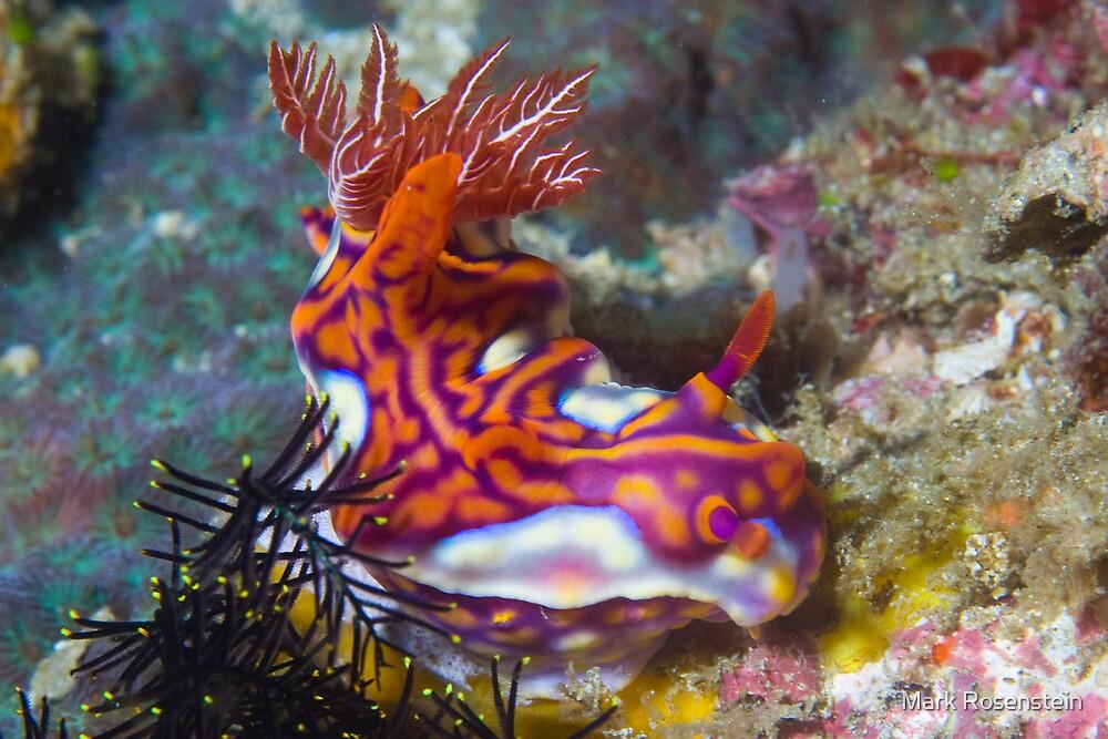 Magnificent Nudibranch by Mark Rosenstein