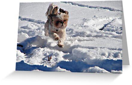 Enjoying the Snow by PicsbyJody