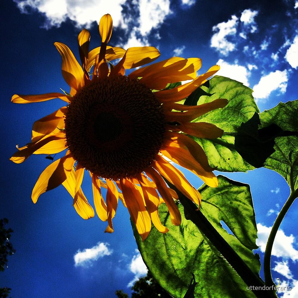 Sunflower by uttendorferarts