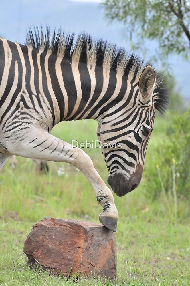 Zebra by DebiDavis