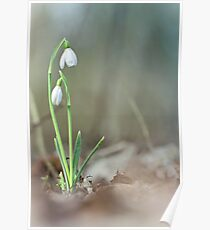 Sneaky snowdrops... Poster