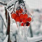Frozen berries by Katarina Kuhar