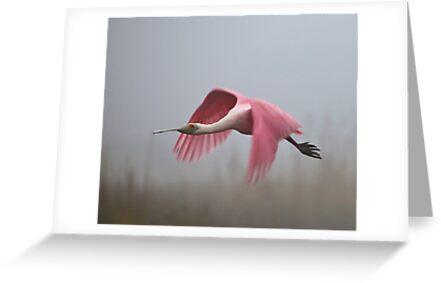 Fly Away by SuddenJim