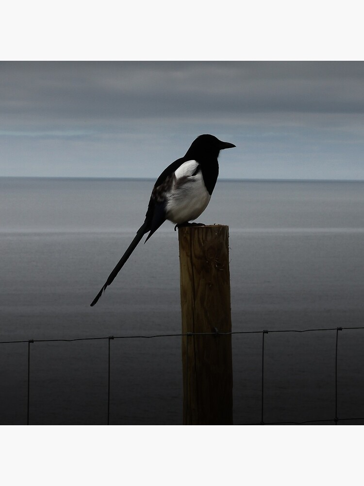 Morning Magpie by hoxtonboy