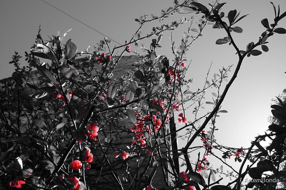 Spring Flowers by ArtemBonda