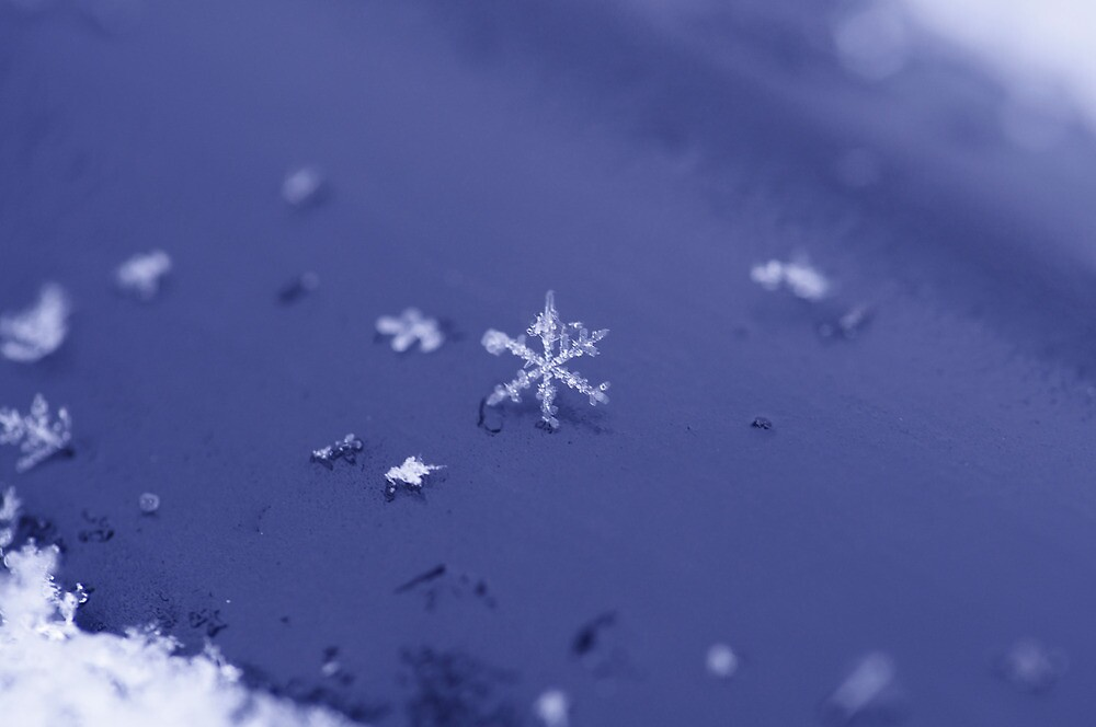 Lonely Snowflake by Cindy Rubino