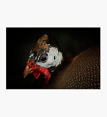 Helmeted Guineafowl Photographic Print