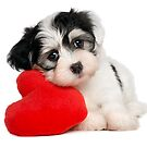 Cute dog and Heart-shaped by skycn520