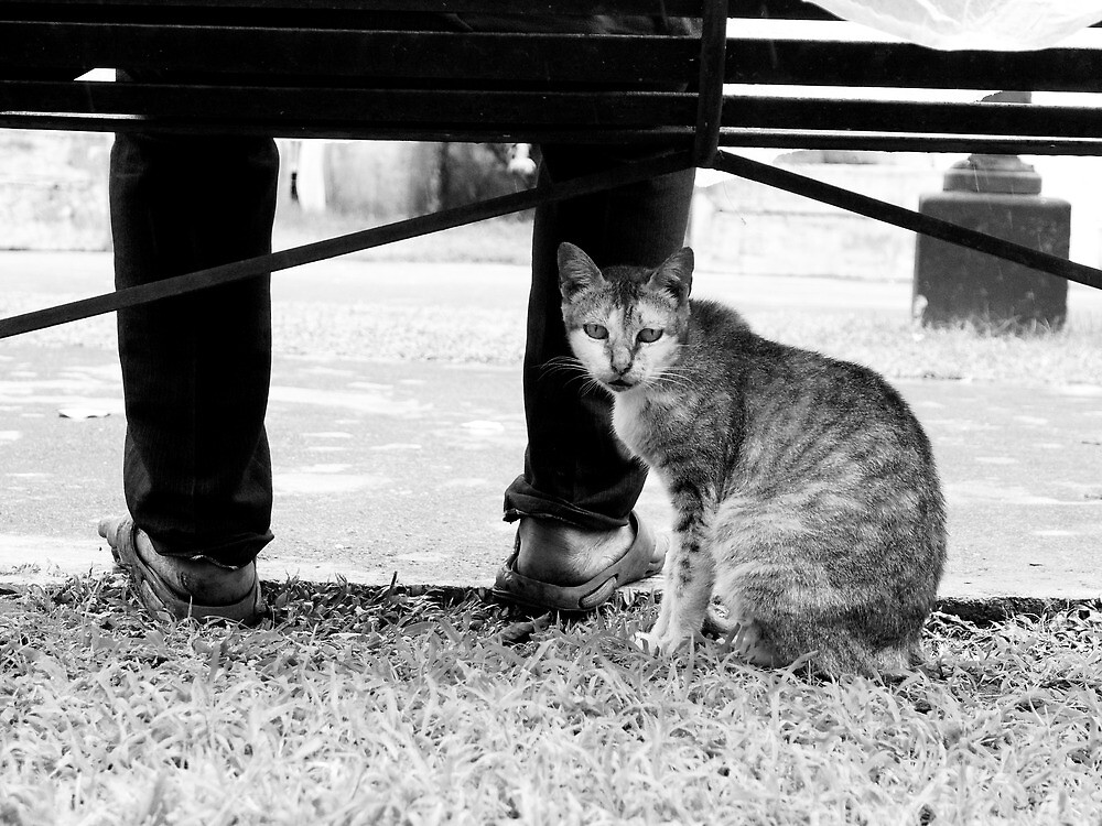 The Stray by orenciojrphotos