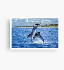 Dolphins of Port Phillip Canvas Print