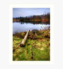 Tarn Hows, Lake District Art Print
