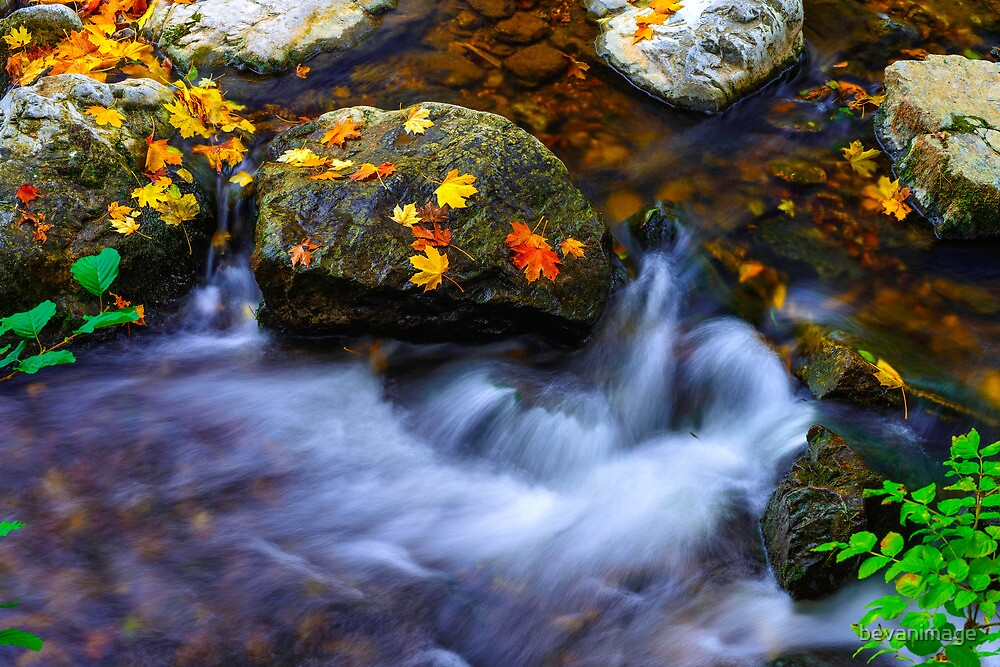 Autumn Fall, Sidmouth, Devon, UK by bevanimage