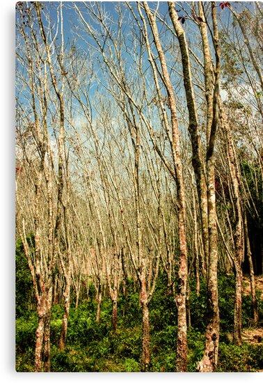 Thailand Woods by Hannah Bates