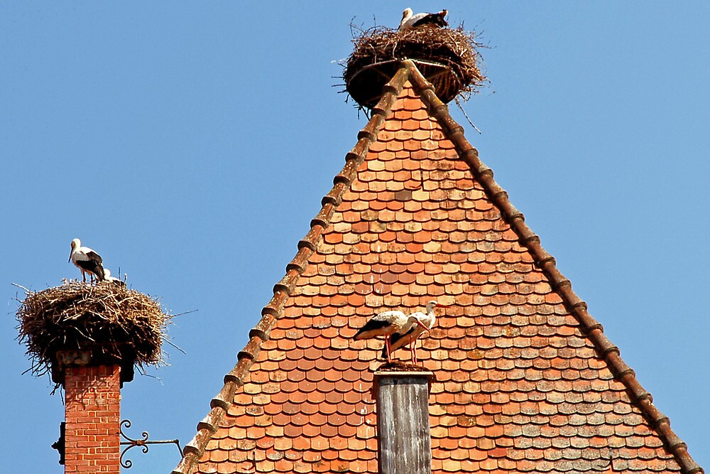 Stork nests on the roof by Arie Koene