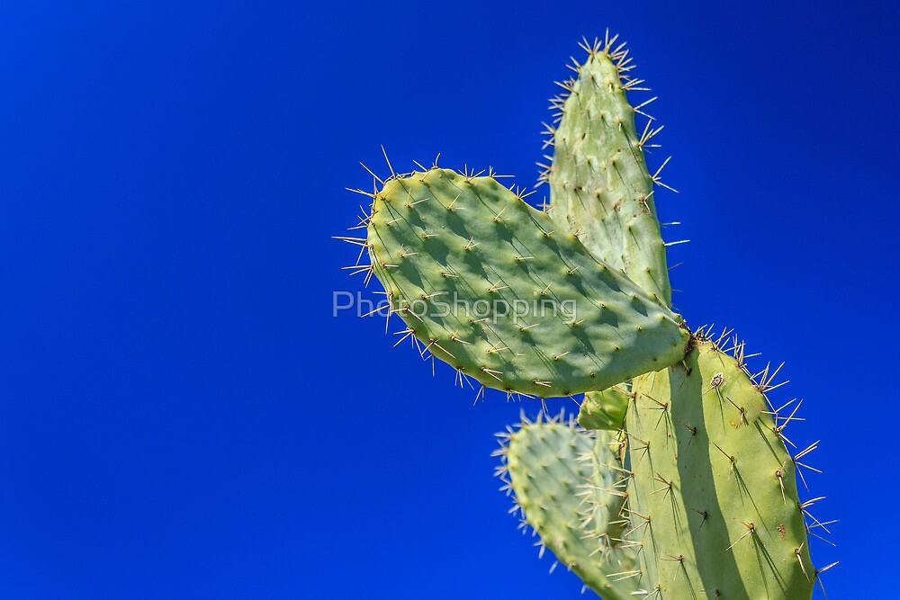 prickly pear cactus 1 by PhotoShopping