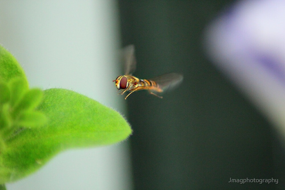 hover  by Jmagphotography