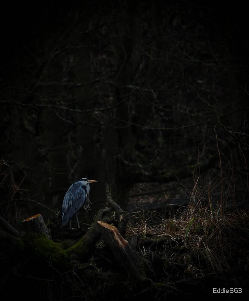 Grey Heron by EddieB63