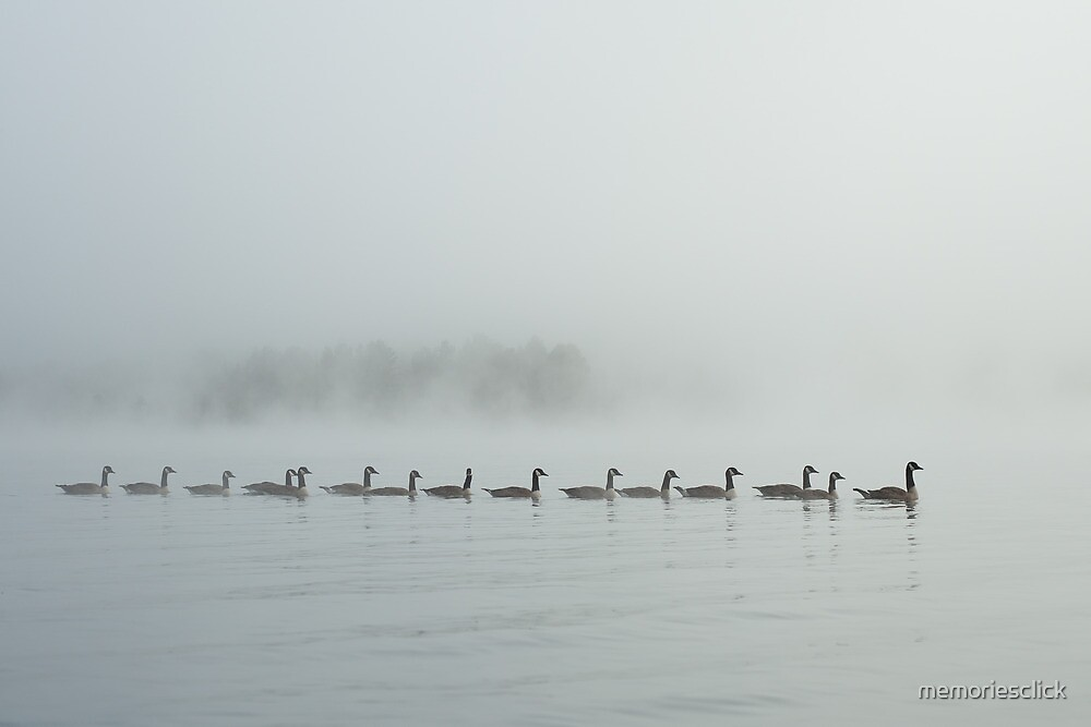 Geese on a Misty Lake by memoriesclick