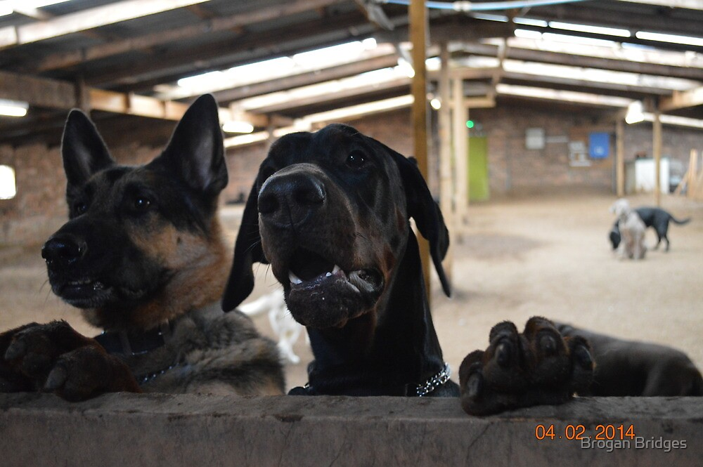 dogmore kennels 2014 by Brogan Bridges