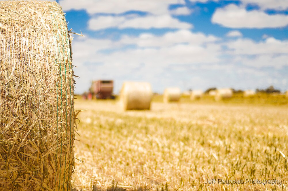 Hay There by Jeff Reynolds Photography