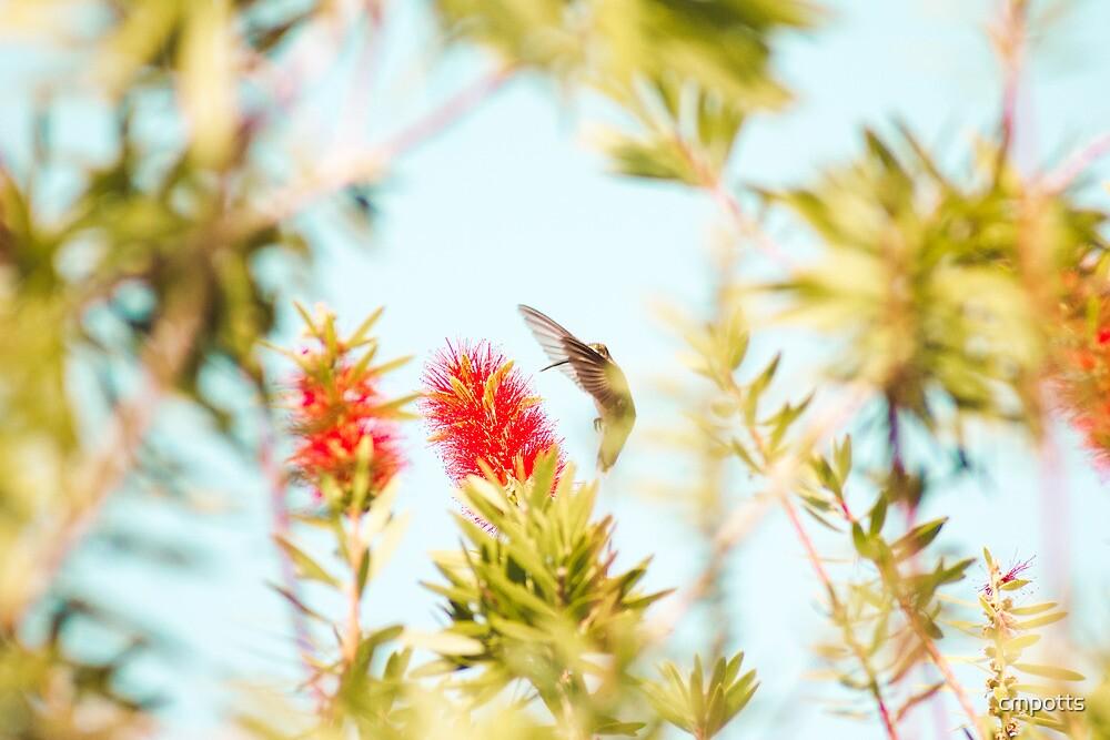 hummingbird by cmpotts