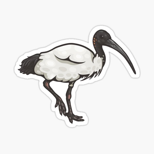 Australian White Ibis Sticker